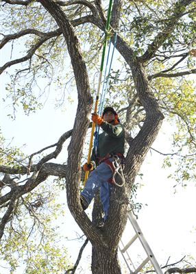 Local Tree Care
