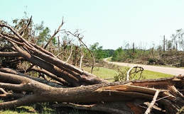 Tree Removal Contractor Daytona Beach FL